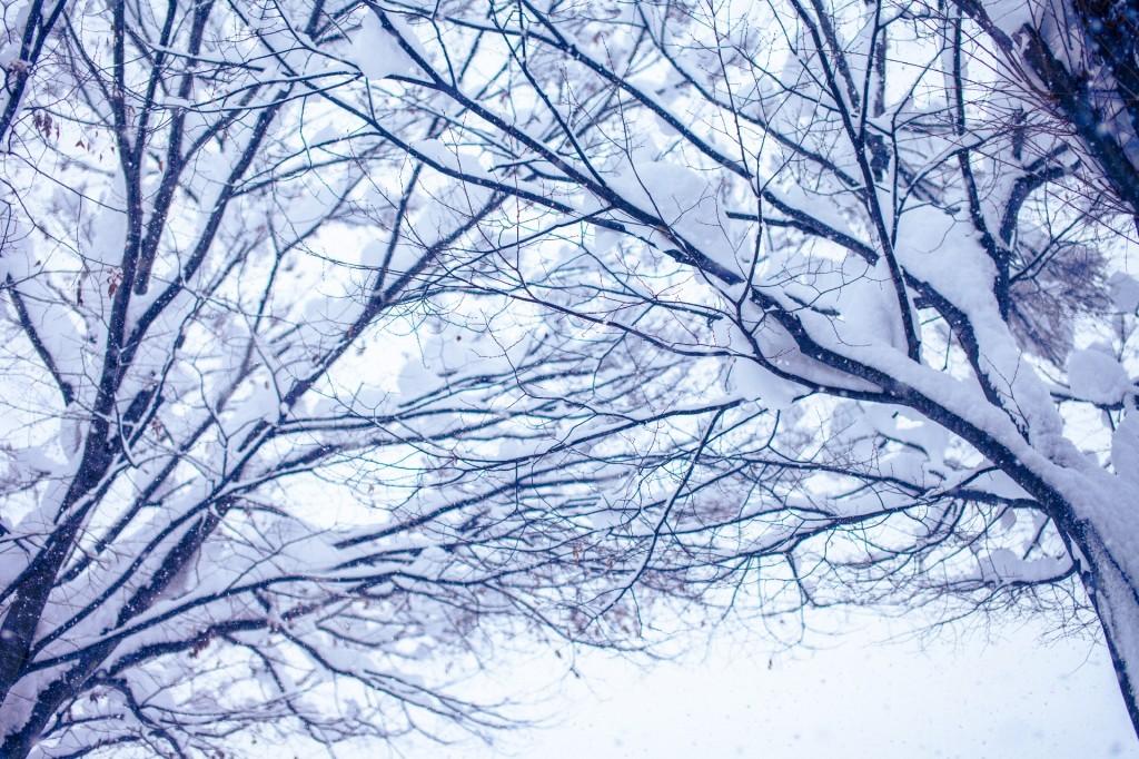 アクアリスト 冬 水温対策