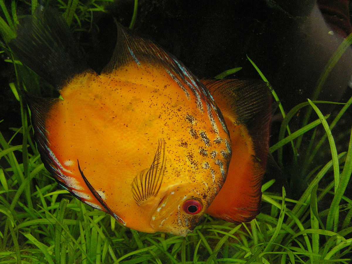 Gdynia_ryba