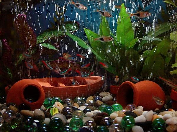 Small_aquarium