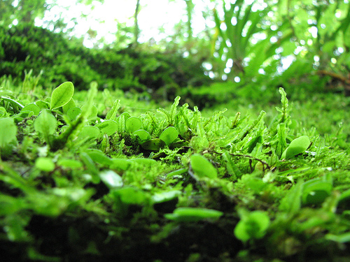 photo credit: Mossy forest stone via photopin (license)