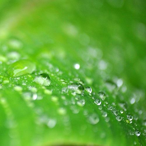 photo credit: summer rain via photopin (license)