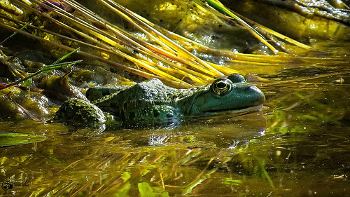 photo credit: Frog in the biotope via photopin (license)