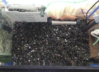 底面濾過式水槽2セットを立ち上げ 写真提供