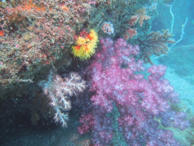 サンゴ2 f