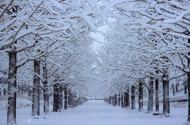 雪 冬 f