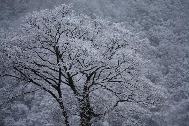 冬眠 メダカ